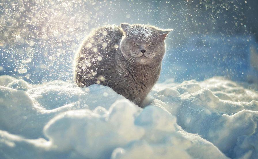 мороз кот